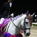 写真: 川崎競馬の誘導馬05月開催 藤Ver-120514-19-large