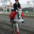 写真: 川崎競馬の誘導馬05月開催 カーネーションVer-120516-02-large