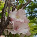Photos: 里桜 初々しく☆