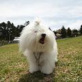 犬と写真部