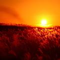 Photos: 『秋海。。。』