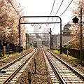 サクラサク駒場東大前駅に停車する3000系