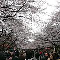 2010年3月末、上野公園。