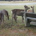 Photos: 鹿とカラス