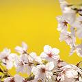 春色の光に