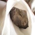写真: ぽっけの中で寝よった(笑)