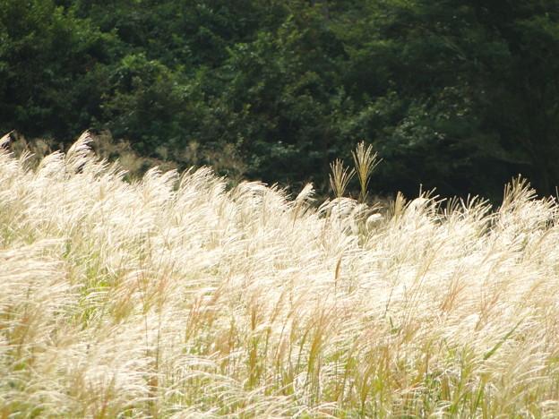 その者青き衣をまといて金色の野に降りたつべし。