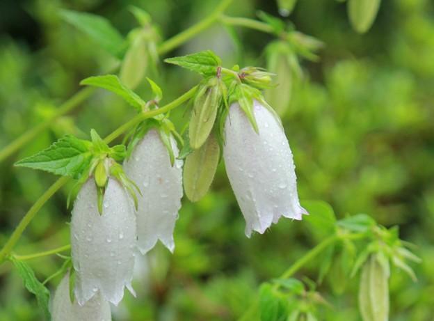 写真: 白い雨粒