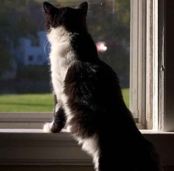 kitten1023_08