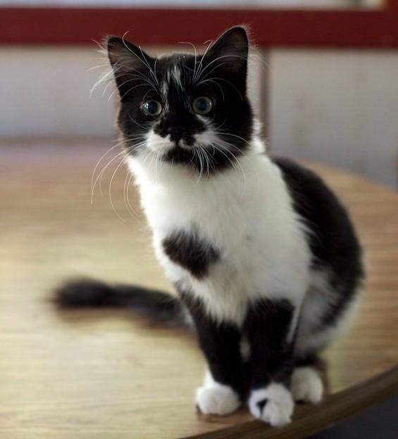 kitten1023_09