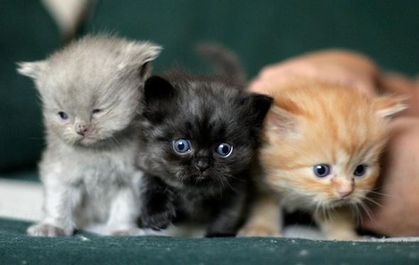 kitten1044