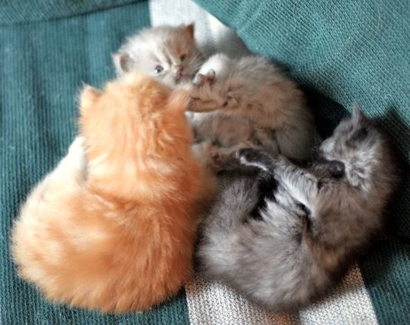 kitten1044_11