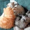 Photos: kitten1044_11