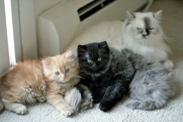 kitten1044_17