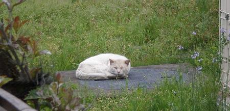 猫が寝てました♪_04