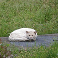 写真: 猫が寝てました♪_04