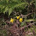 Photos: flowers05162011dp1-01