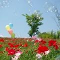 Photos: IMGP4000_0527