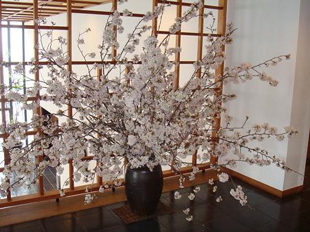 桜のお出迎え@強羅花壇