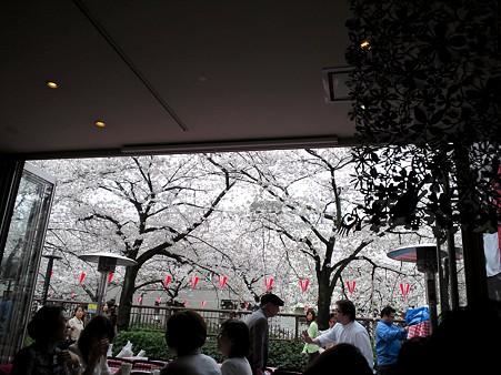 店内からの桜2@葉花DECO