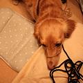 Photos: なぜか毛糸に絡まってるメレ