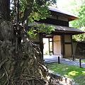 写真: 茨木門と木の根っこ