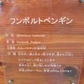 20140627屋島30