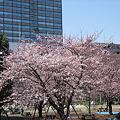 Photos: 日本橋浜町公園