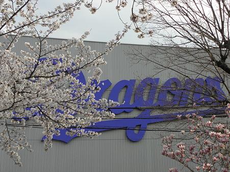 106 桜が満開の日でした