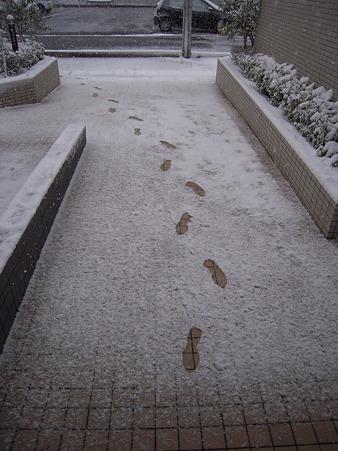 買い物に行った帰りのマンションの入り口付近。ちょっと出て行っただけで、足跡が残るくらいに積もるんだ~。
