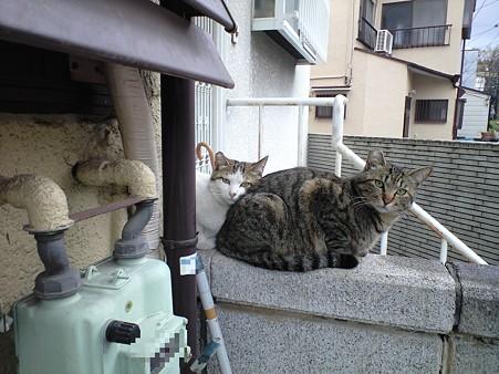 20100412_neko2