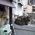 写真: 20100412_neko2