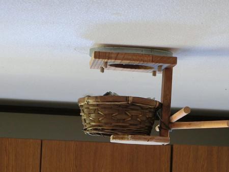 新しい巣完成