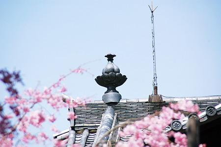 2010年04月04日_D奈良国立博物館仏教美術資料研究センターSC_1287