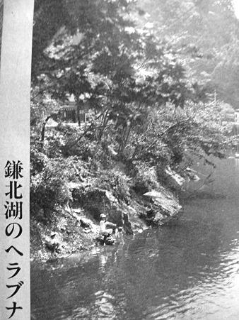鎌北湖のヘラブナ