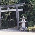 Photos: 白山比咩神社 鳥居