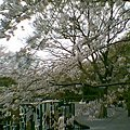 写真: 20100404_002