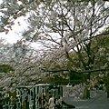 Photos: 20100404_002