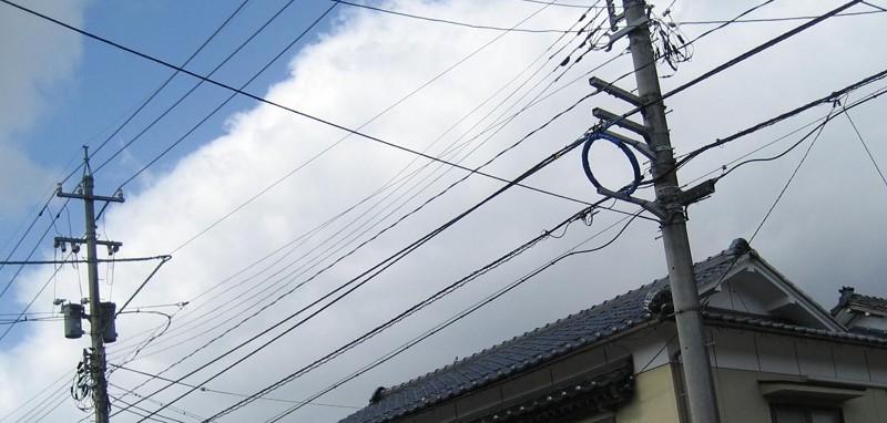 小鳥2010年3月14日屋根の上