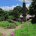 2012年6月6日 般若寺 (4) 十三重石塔