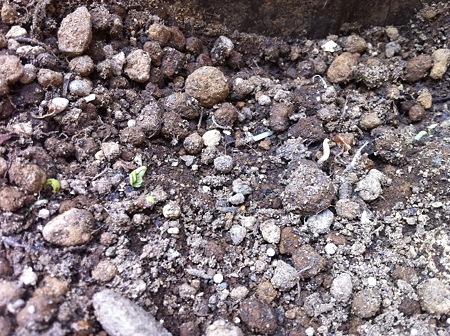 土が掘り返されてる!! なぜ!!!?(・_・;?1