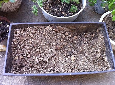 土が掘り返されてる!! なぜ!!!?(・_・;?2