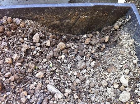 土が掘り返されてる!! なぜ!!!?(・_・;?3