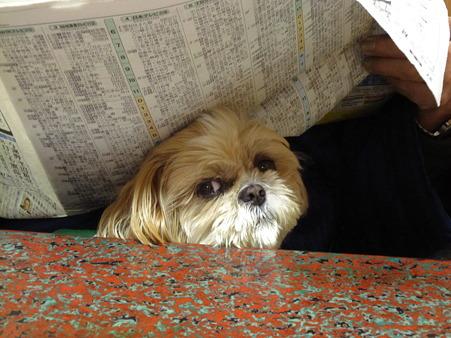新聞に隠れてる?