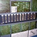 写真: 蝶の標本たち@いわき市文化センター