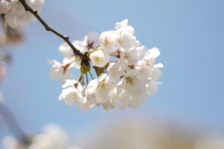 陽光に花開く