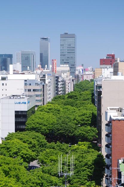 Photos: 青葉の風・杜の都