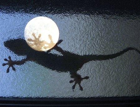 月面にヤモリの足 (青)