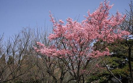京都府立植物園36