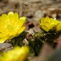 春の兆し_4.10